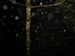 Black Creek rain 3