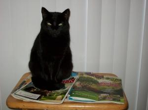 Scrounge Cat # 2 picks her next spot