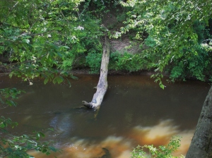 Look closely at the log for the basking turtle. I believe it is a river cooter. Photo taken from our deck.